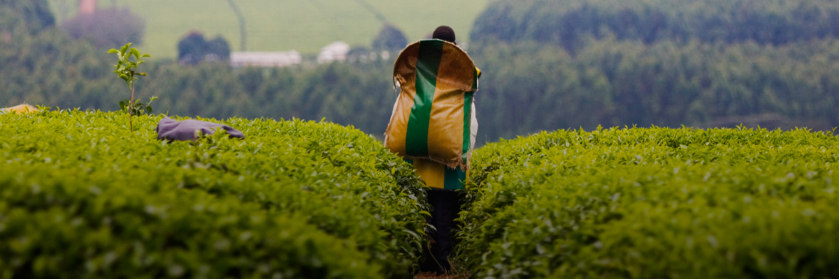A New HERproject Frontier: Bringing Health Education to Tea Smallholders in Kenya